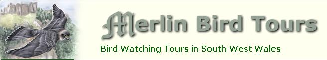 Click here to visit www.merlinbirdtours.co.uk